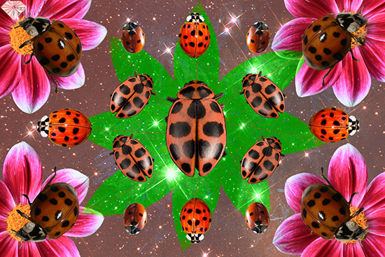 What S The Spiritual Meaning Of A Ladybug Is It Good Luck