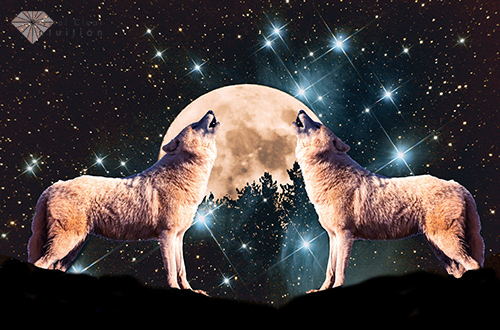 Wolves Howling At The Moon The Meaning And Symbolism