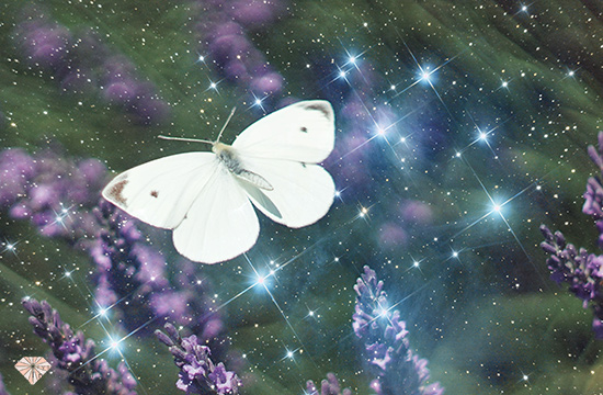 31+ Why do i keep seeing white butterflies information