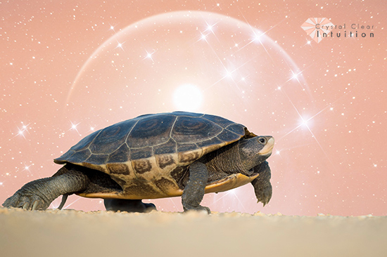 Turtle walking on sand with pink sun in the background