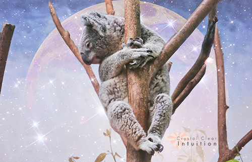 koala hugging a tree with an image of a pink full moon and stars in the background.