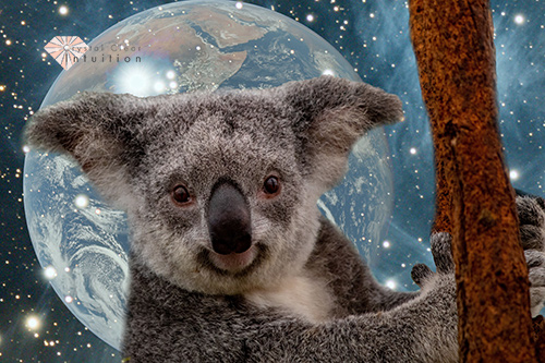 koala hanging onto a branch with stars and the earth in the background.