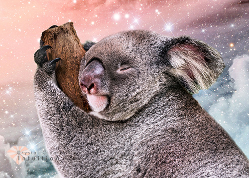 koala bear sleeping on branch with a background of clouds and stars.