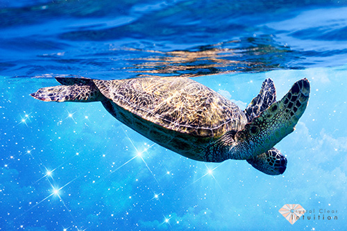 Turtle diving into the water