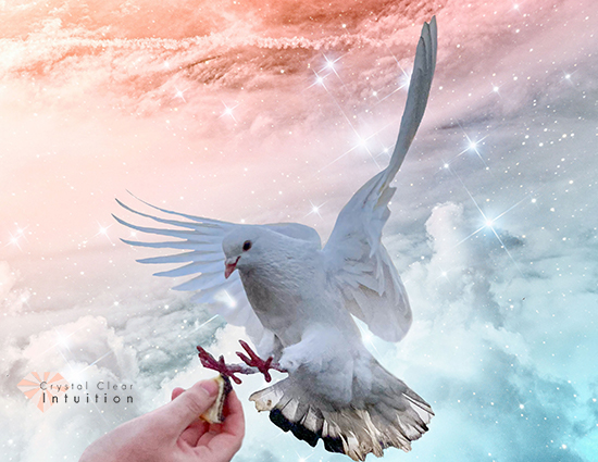 dove flying to someone's hands with colorful clouds in the background