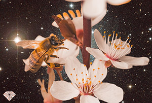 bee on flower with space in the background