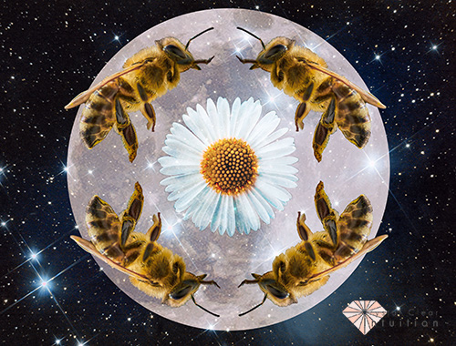 four bees surrounding flower with moon in the background