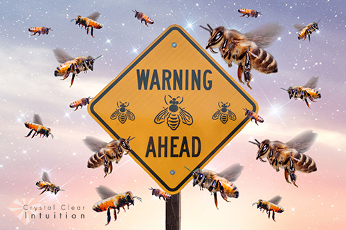"""bees swarming around sign that stays """"warning bees ahead"""""""